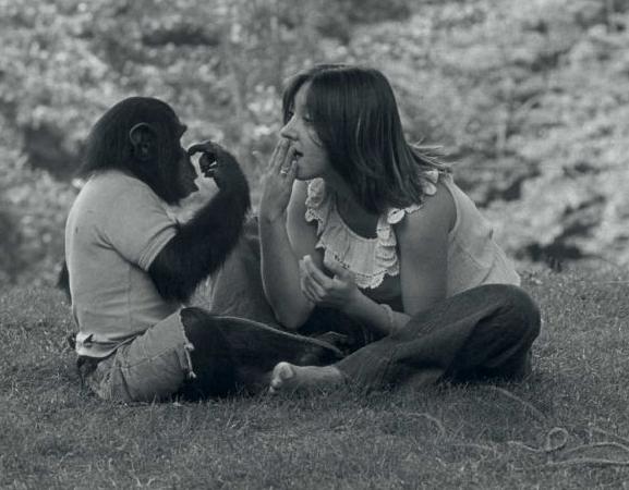 Episode 128: Dollop: Nim the Chimp